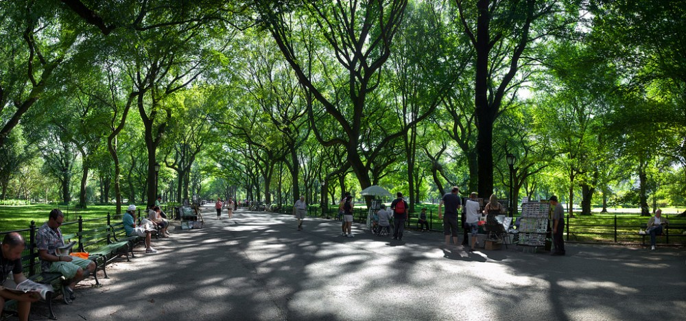Image of elm trees lining the walkway in Central Park, NY, NY, USA